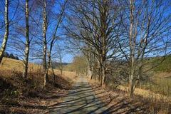 Träd vårlandskap, Hartmanice, bohemisk skog (Šumava), Tjeckien Arkivfoto