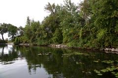 Träd vaggar och lilly block i en fjärd längs en flod Arkivbilder