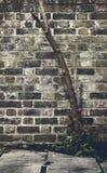 Träd vid den gamla tegelstenväggen royaltyfri bild