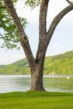 Träd vid den pittoreska sjön royaltyfri fotografi