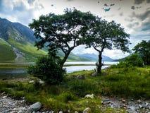 Träd vid en fjord Royaltyfri Bild