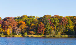 Träd vid en sjö Royaltyfri Fotografi