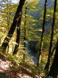 Träd vid floden Arkivfoton