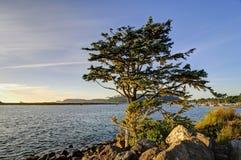 Träd vid havet på solnedgången Arkivbilder