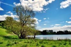 Träd vid kanten av Loughrigg Tarn Royaltyfri Foto