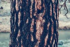 Träd vinter för blommasnowtid Arkivfoton