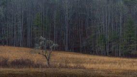 Träd vinter i den Cataloochee dalen, Great Smoky Mountains nation Arkivbild