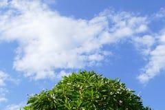Träd, vit blomma, moln och blå himmel för abstrakt bakgrund Royaltyfri Fotografi