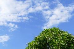Träd, vit blomma, moln och blå himmel för abstrakt bakgrund Arkivfoton