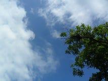 Träd vs himmel Fotografering för Bildbyråer