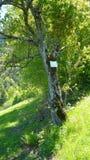 Trädanmärkningar Royaltyfria Bilder