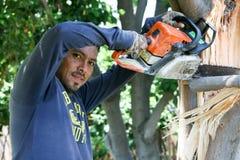 Trädarbetaren sågar en bruten trädlem Fotografering för Bildbyråer