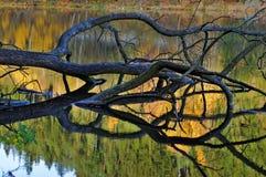 Trädavverkning in i vattendammet Arkivbilder
