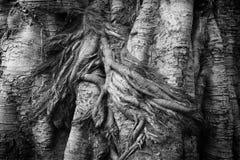 Trädblack&whitetextur Fotografering för Bildbyråer