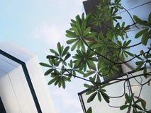Trädblad och hög byggnad i bangkok arkivbild