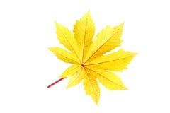 Trädblad som isoleras på vit på vit bakgrund Royaltyfria Bilder
