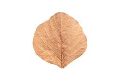 Trädblad som isoleras på vit på vit bakgrund Fotografering för Bildbyråer