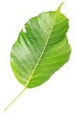Trädblad som isoleras på vit på vit bakgrund Arkivbild