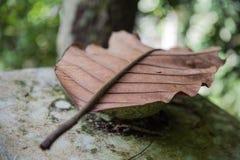Trädbladet vaggar på i skog Royaltyfria Foton
