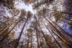 Trädblast arkivbilder