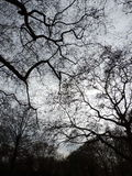Trädblast Arkivfoto