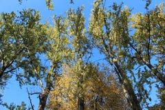 Trädblast i nedgången i parkerar på den Krestovsky ön i St Petersburg royaltyfri foto