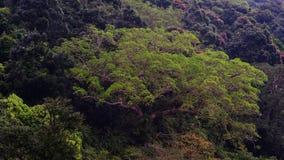 Trädblast i skogen, Da Nang, Vietnam Royaltyfri Bild