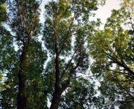 Trädblast i sommaren Royaltyfri Foto