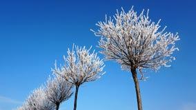 Trädblast utan sidor i snön mot himlen royaltyfria bilder