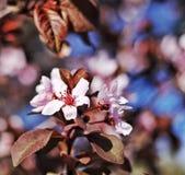 Trädblom royaltyfri fotografi