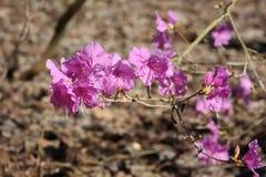 Trädblommor Royaltyfria Bilder