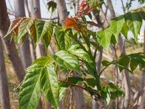 Trädblomningar arkivfoto