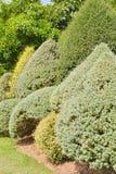 Trädbräm Royaltyfria Bilder