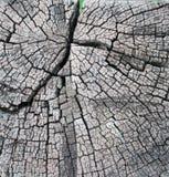 Trädbråtecloseupen gnarl Arkivbilder