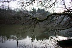 Trädbranche över floden i vinter royaltyfria foton