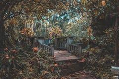 Trädbron Arkivfoto