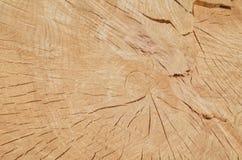 Trädcirklar Royaltyfri Bild