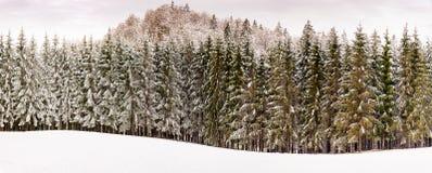 Trädcoverd i snö royaltyfri bild