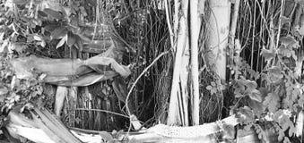 Träddyrkan för folk arkivbild