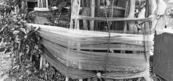 Träddyrkan i Thailand royaltyfria foton