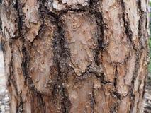 Trädek med champinjonen Royaltyfri Fotografi