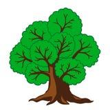 Trädek också vektor för coreldrawillustration Arkivfoto