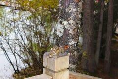 Trädekorre på en wood fench Fotografering för Bildbyråer