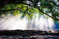 Träden Royaltyfria Bilder