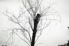 Träden royaltyfri bild