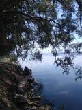 Träden böjde över vattnet Arkivfoto
