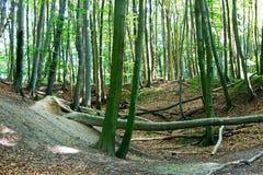 Träden i en skog Royaltyfri Foto