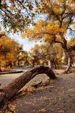 Träden i höst Royaltyfria Bilder