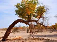 Träden i höst Arkivbilder