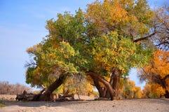 Träden i höst Royaltyfria Foton